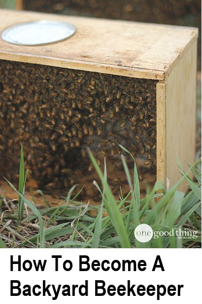 There seems to be a real resurgence with beekeeping, and that's a good thing, as one thing is for sure - the bees need our help right now. If you have large garden/backyard, and you are into growing your own/homesteading, I highly recommend you consider...