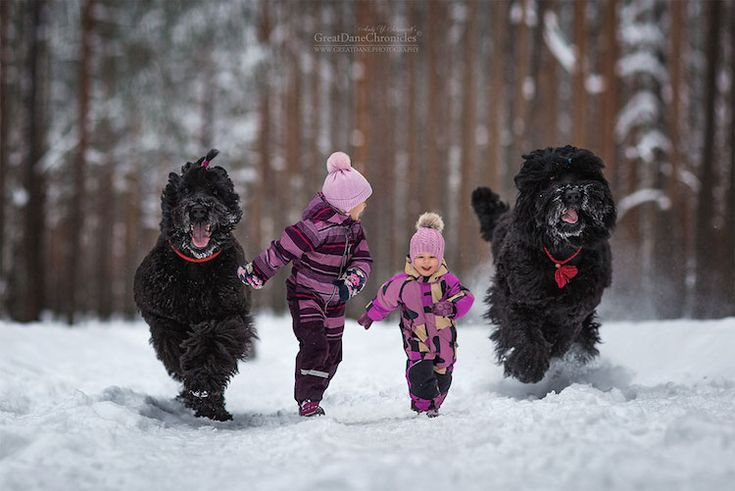 andy seliverstoff little kids big dogs (photo article)