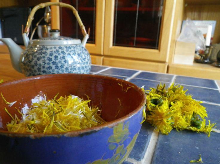Les 100 meilleures images concernant plantes sauvages for Plante kefir