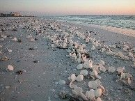 10 Best Images About Fort Myers Beach On Pinterest The