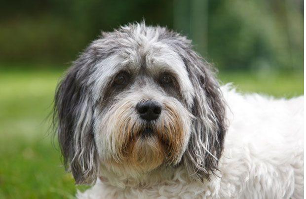 Polish Lowland Sheepdog - Dog Breed History, Information and Pictures   http://www.pet360.com/dog/breeds/all-about-polish-lowland-sheepdogs/pCub_DsSqkyFDy8NWJUKyA?utm_source=freekibble&utm_medium=freekibble&extcid=fkib