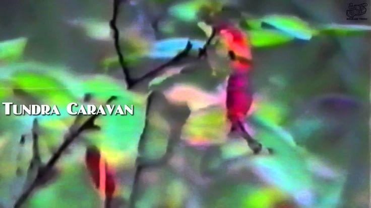 Tundra Caravan (Release Video) Tundra - music