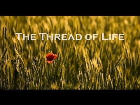 The Thread of Life - YouTube