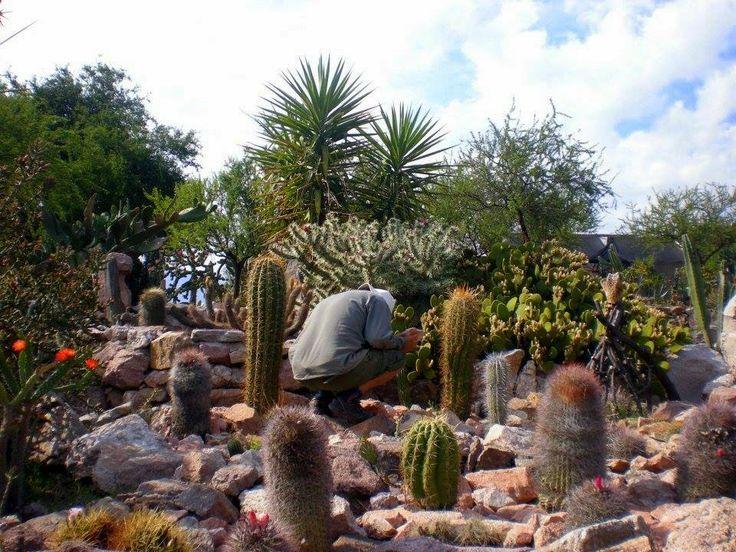 museo comechingon y jardin botanico de cactus de mina clavero cordoba argentina https