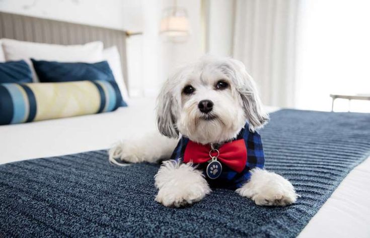 Planning a trip with your pet in tow? There are plenty of US hotels who welcome four-legged family m... - Hotel Nikko San Francisco