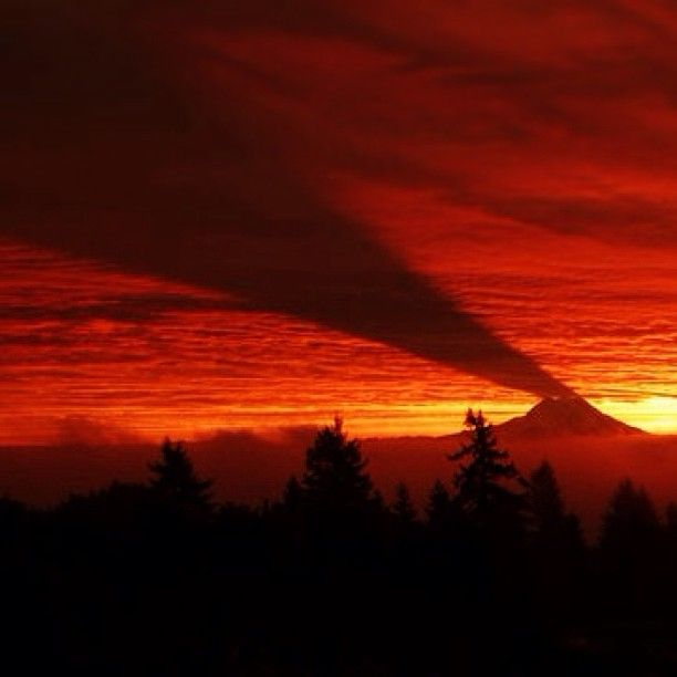 Mt. Rainier casting a shadow on the clouds as the sun rises.
