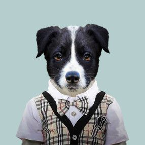 Border Collie - Yago Partal