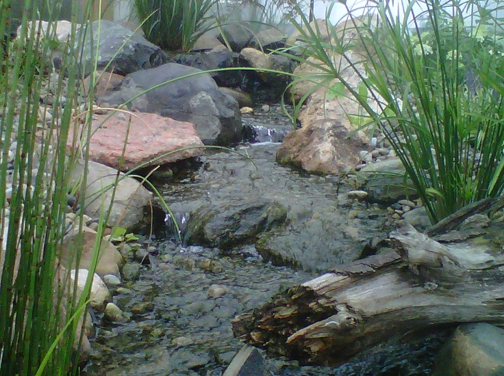 74 best images about pond ideas on pinterest pond for Decorative pond fish crossword