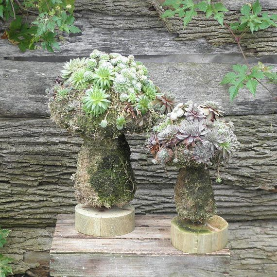 how to make a succulent topiary
