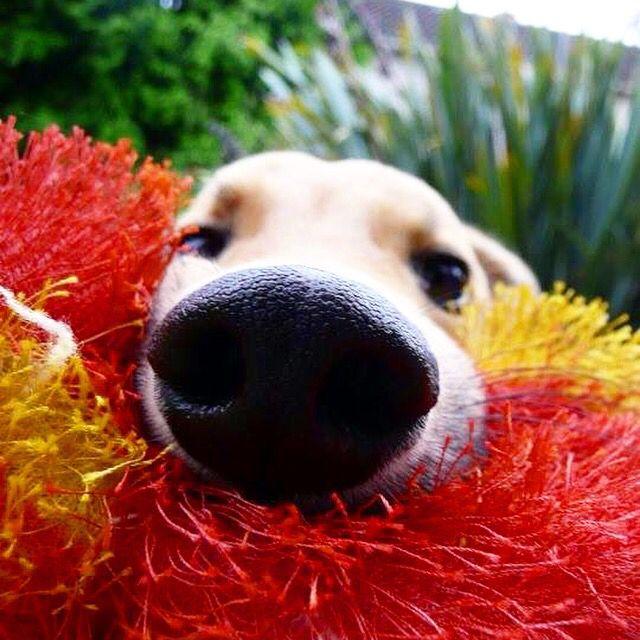 Wake up fur mom and dad!!! Let's go for a walk!  #petstagram #petsofinstagram #petsagram #petlover #petoftheday #dogsofinstagram #dogstagram #doglover #dogslife #dogslove #instapet #instalikes #likesforlikes #puppiesofinstagram #puppyoftheday #puppylife #puppyplay