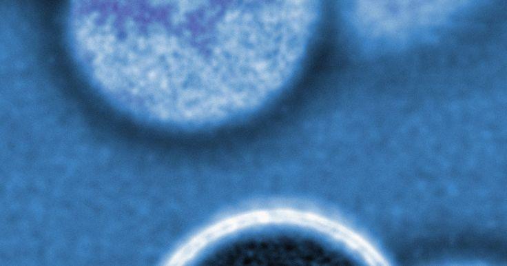 Tipos de reprodução assexuada com fissão binária. A reprodução assexuada ocorre quando um organismo se reproduz sem precisar de outro organismo da mesma espécie. Assim, qualquer descendência de reprodução assexuada tem genes de apenas um dos pais. Uma das formas mais comuns de reprodução assexuada é fissão binária, mas há também outros tipos, incluindo a fragmentação e partenogénese.