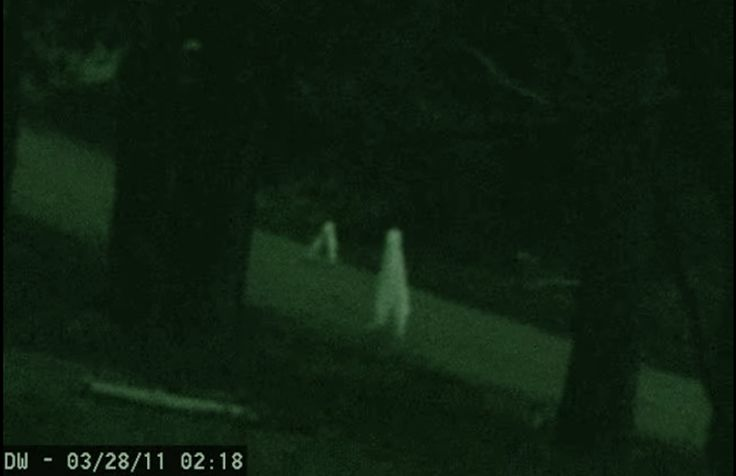 There have only been two reported sighting of the Nightcrawler, or the Fresno Alienas it is also known. Its first appearance in Fresno, California and the nextin Yosemite National Park. Inboth sightings, thestick-like beings move in a fluid fashion and upon closer analysisappear to be a relatively short (approx. 4 feet in height), and extremely