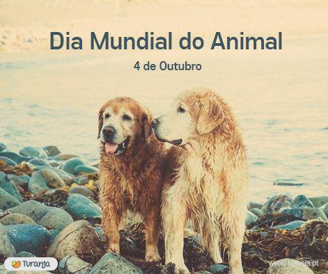 Celebra-se hoje o dia Mundial do Animal que tem como objetivo sensibilizar a população para a necessidade de proteger os animais e a preservação de todas as espécies.