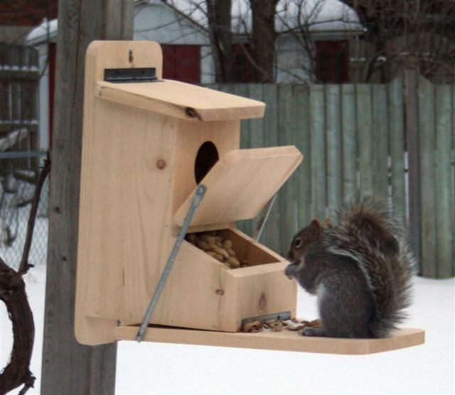 Squirrel Feeder Plans - WoodWorking Projects & Plans