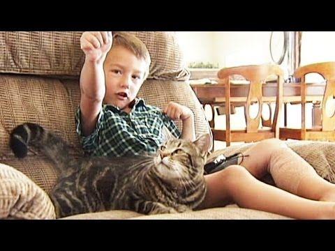 Cat saves kid