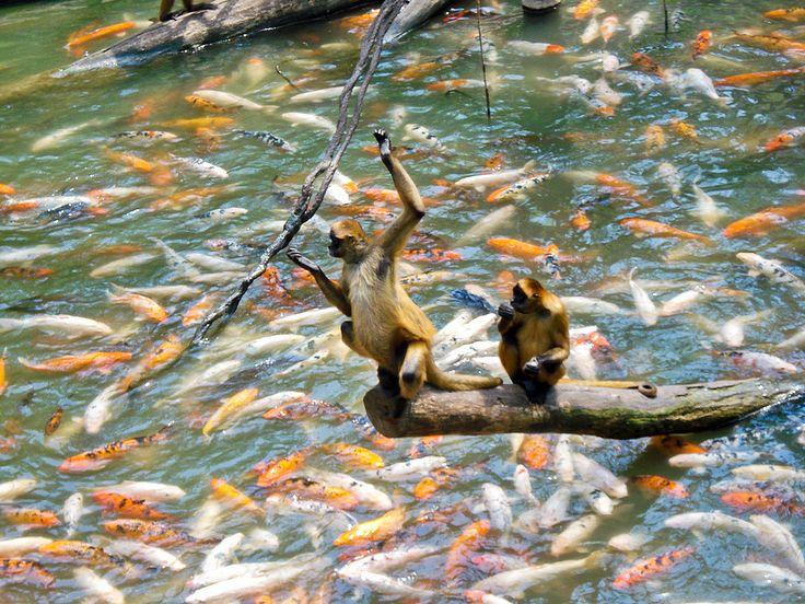 A legszebb állatkertek és vadasparkok a világon: Henry Doorly Állatkert - Nebraska, Omaha (USA)
