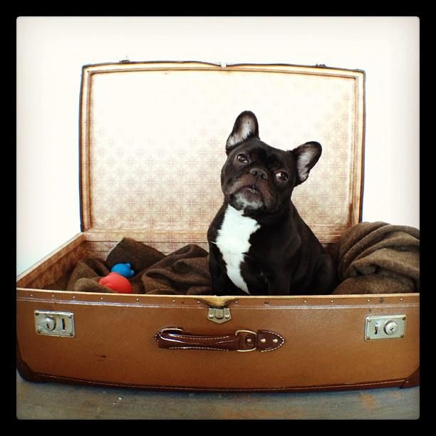 Suitcase French Bulldog Bed Sweet Dreams Pinterest