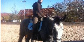 ANREITE-COACHING  Du hast ein junges Pferd und möchten es selbst ausbilden und anreiten? Die Grammatik des Reitens™ von der Arbeit an der Hand, bis in den Sattel. Ich begleite Dein Pferd und Dich gerne dabei, diesen anspruchsvollen Weg richtig zu gehen.