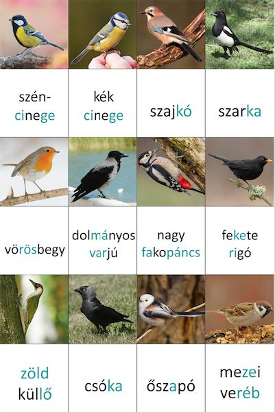 kerti madaras memóriakártyák