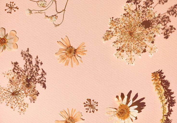 Jim Norton #Pink #Floral Fuze Reps | Toronto Ontario Canada | TEL 416.656.8585
