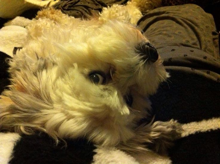 Penny dog :)
