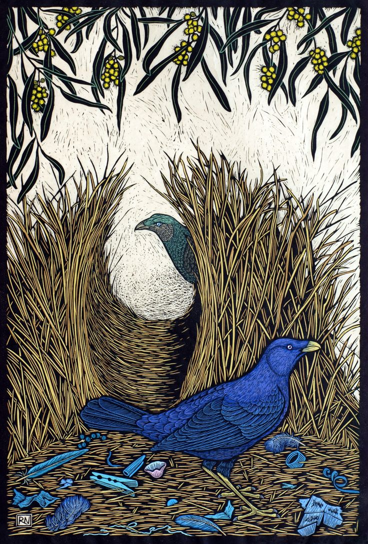 Satin Bower Bird - Hand coloured linocut on handmade Japanese paper by Rachel Newling
