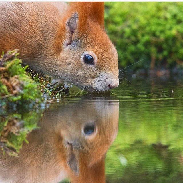 What would you say about that amazing picture?! Red squirrel  Follow @ecoconltd for more inspiring posts!  -  Want to be featured? Use the hashtag #ecoconftme :)  @john.gooday