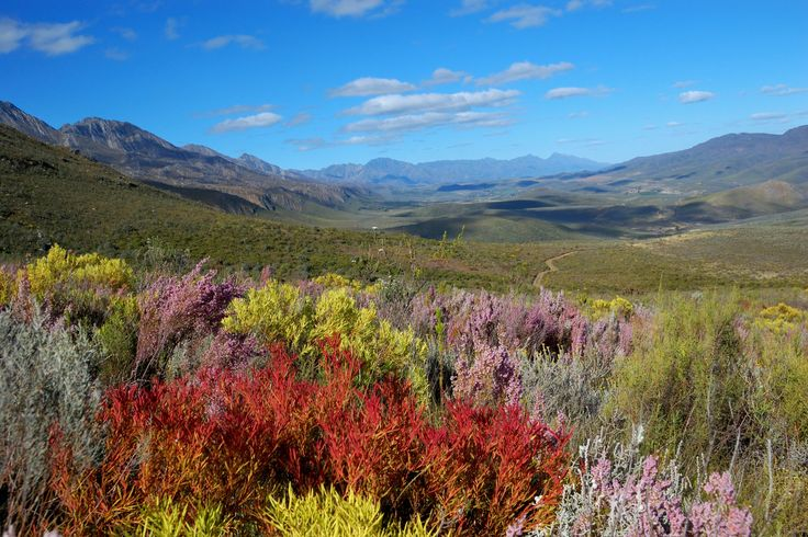 The vegetation is remarkably diverse, featuring renosterveld, mountain fynbos…