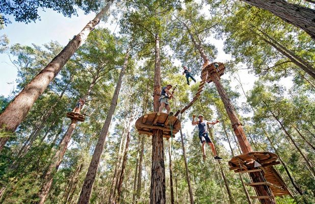 Tree Top Adventure Park. 3 courses for children 3 - 9 yrs, 3 flying fox  17 flying foxes for Juniors (3 courses) and Adults (4 courses), 90 challenges. Located inside Plough & Harrow, Western Sydney Parklands, Elizabeth Drive, Cecil Hills  Phone: 02 8605 4300  Email: westernsydney@ttap.com.au Also in the Central Coast and Newcastle