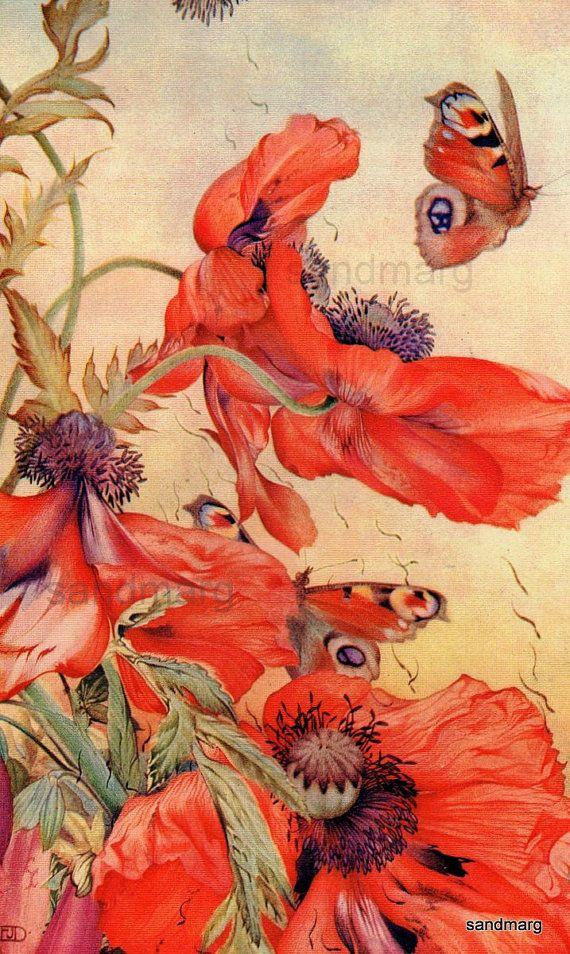 Poppies and Butterflies Vintage Botanical Print Edward Julius Detmold for Framing. via Etsy.