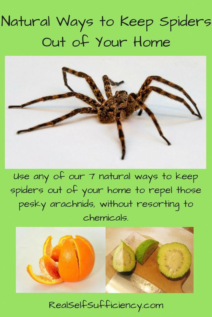 Greenhomepestcontrol Natural Spider Repellant Pest Control