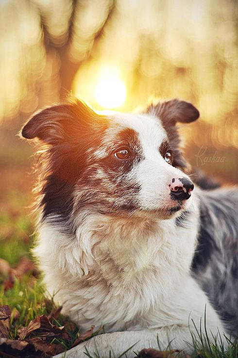Dogs Photography by Kasia