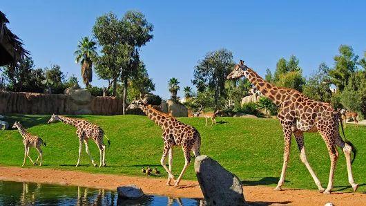 Noticias de Comunidad Valenciana: ¿Tienen futuro los zoos? Bioparc hace caja y…