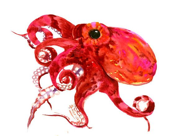 Burgundy red, crimson, pink, red Octopus, Original watercolor painting, 12 X 9 in, sea animals, sea world, seafood