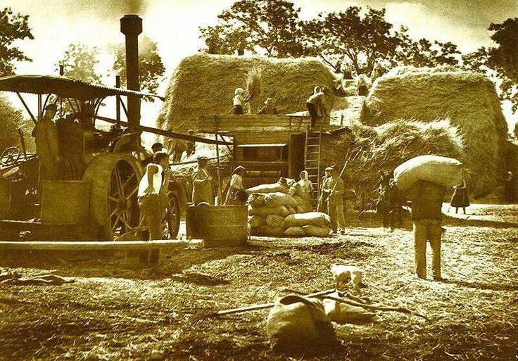 Cséplés cséplőgéppel, Hatvan, 1930-as évek.