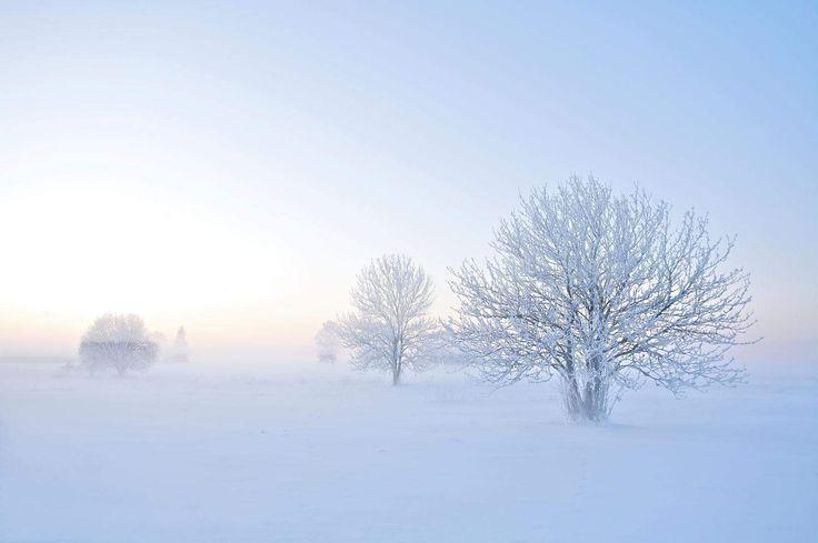 Vinter veggbilde | Lerretsbilde | Sne | Hvit | Tre | Happywall