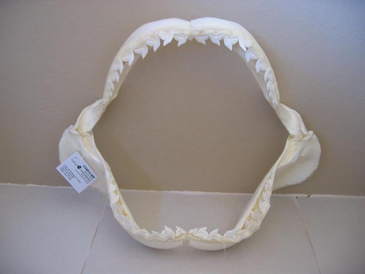 Shark jaw bone tattoo