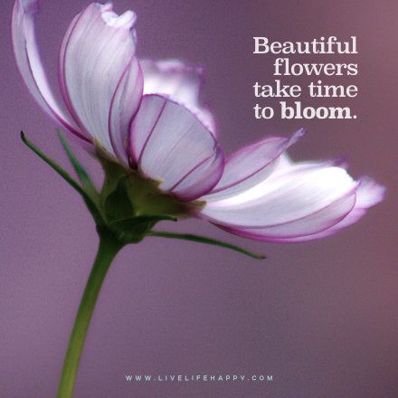 145 Best Images About Flower Quotes
