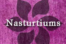 {A Collection of Gumpaste-Fondant Nasturtiums Flowers}