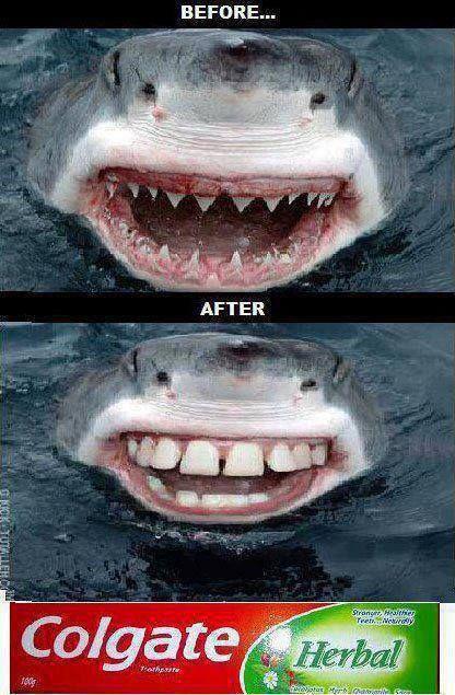 Funny Shark Toothpaste Ad from Colgate #sharkweek | Kanawha City Pediatric Dentistry | #Charleston | #WV | www.pediatricdentistcharleston.com