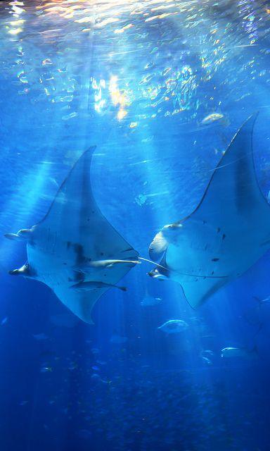 OKINAWA Churaumi Aquarium on Flickr.