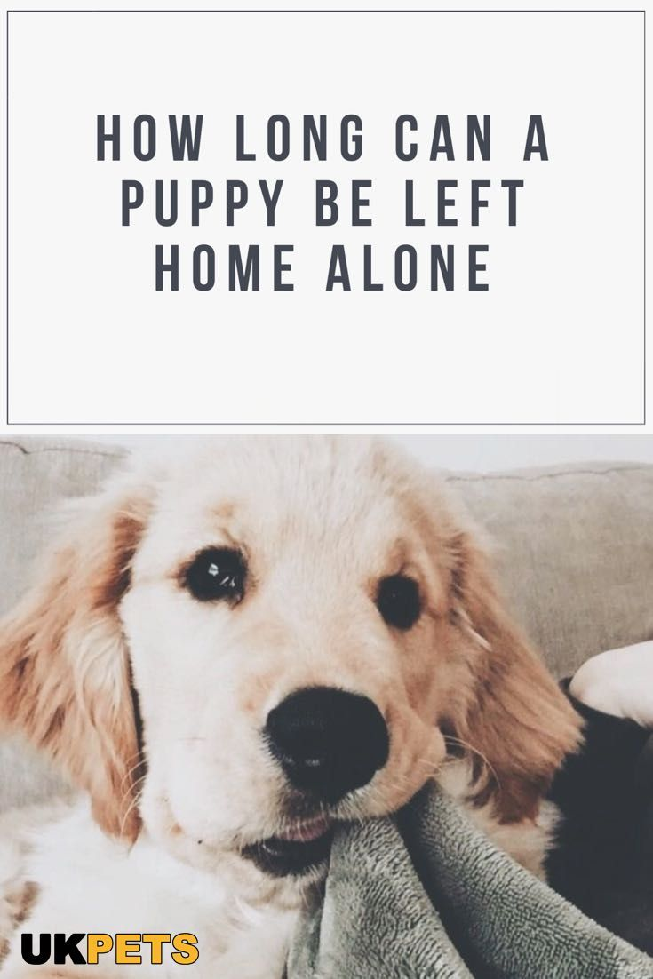 How Many Hours Alone At Home Can Your Puppy Handle What To Do To Keep Him From Misbehaving Read On To Know What To Do Before You Go O With Images
