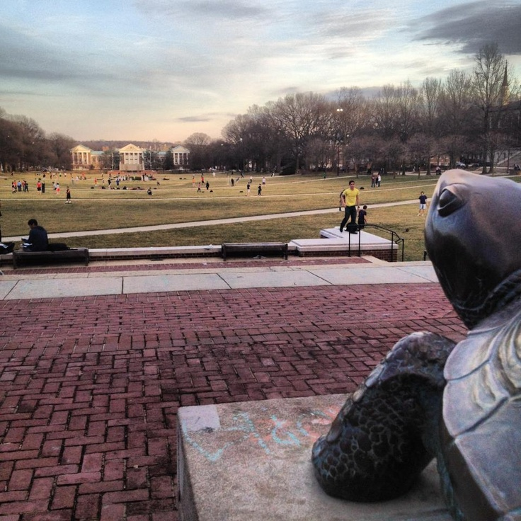 University of Maryland, College Park, Maryland  . gave Testudo nose  hundreds  of times when going to school there starting  1965
