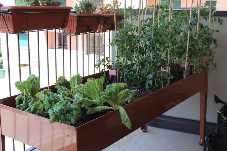 orto sul balcone, giugno 2012 - http://www.erbaviola.com/2012/08/10/tavolo-da-orto-sul-balcone-giugno.htm