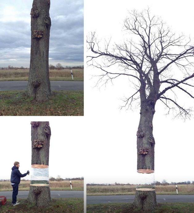 Geniaal #tree #nature #art