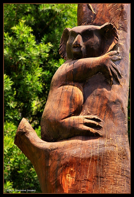 Koala Totem - Chain Saw Carved by Terry Everingham - Black Head Beach, NSW Australia - Copyright - All Rights Reserved - Black Diamond Images