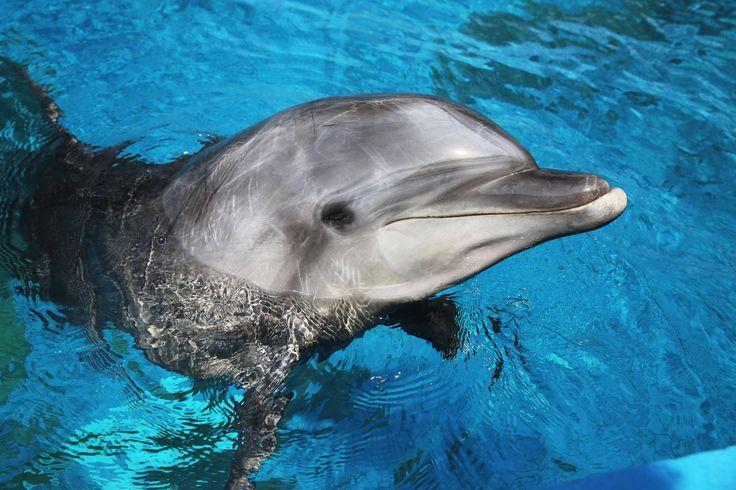 Bild zu Delfin