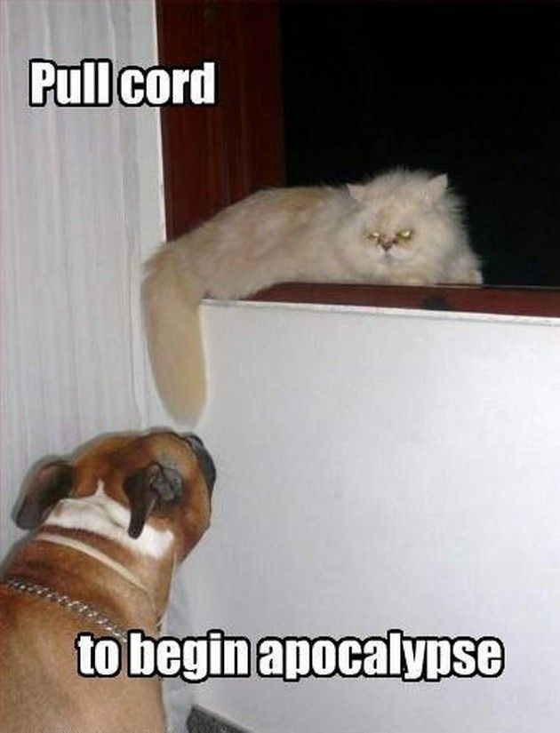 Funny Animal Pictures (16 Pics)