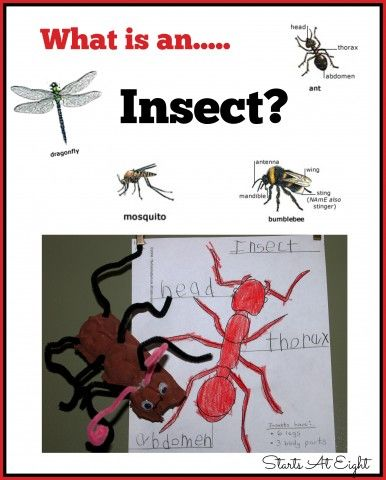 What is an Insect? A Unit Study from Starts At Eight