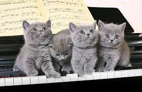 Risultati immagini per foto di gatti che si possono stampare su cuscini